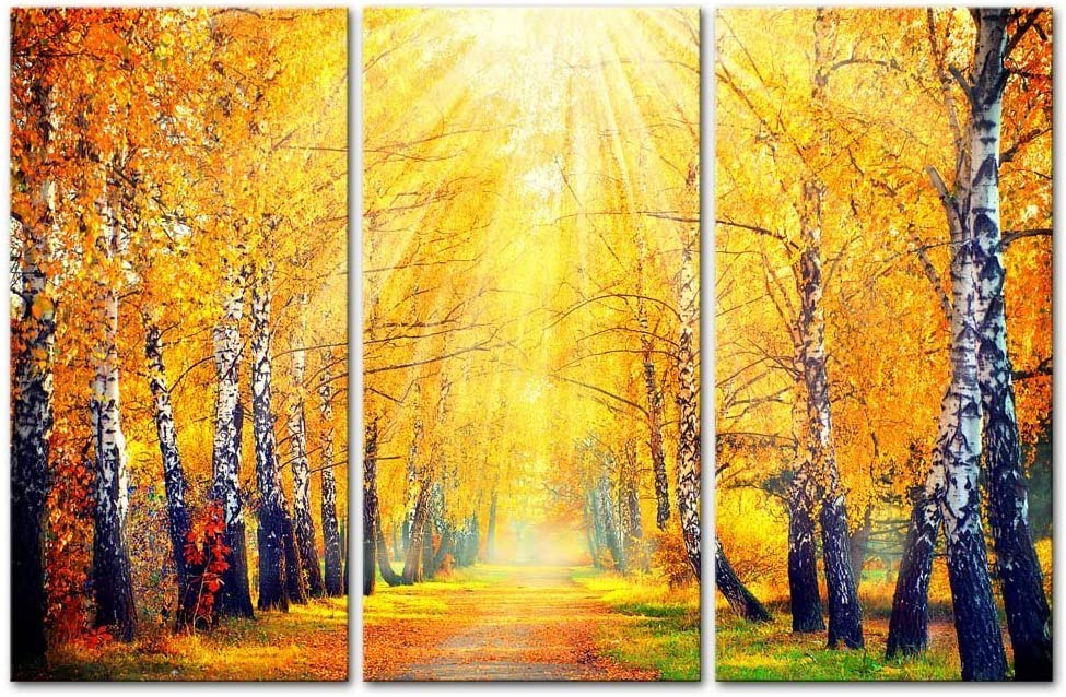 Amazon Com 3 Panel Canvas Wall Art Yellow Trees Forest Sunshine In Autumn Pictures Prints On Canvas Paintings For Home Wall Decor Ready To Hang Posters Prints