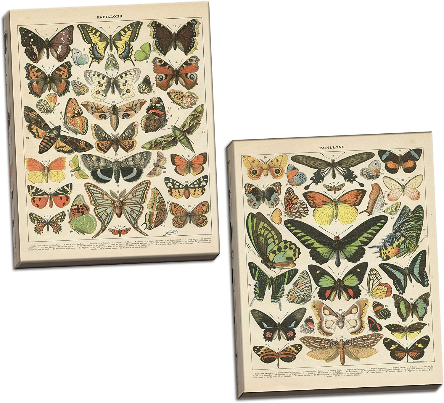 Gango Home Décor Popular Vintage French Types of Papillons Butterflies Set; Two 16x20in Hand-Stretched Canvases