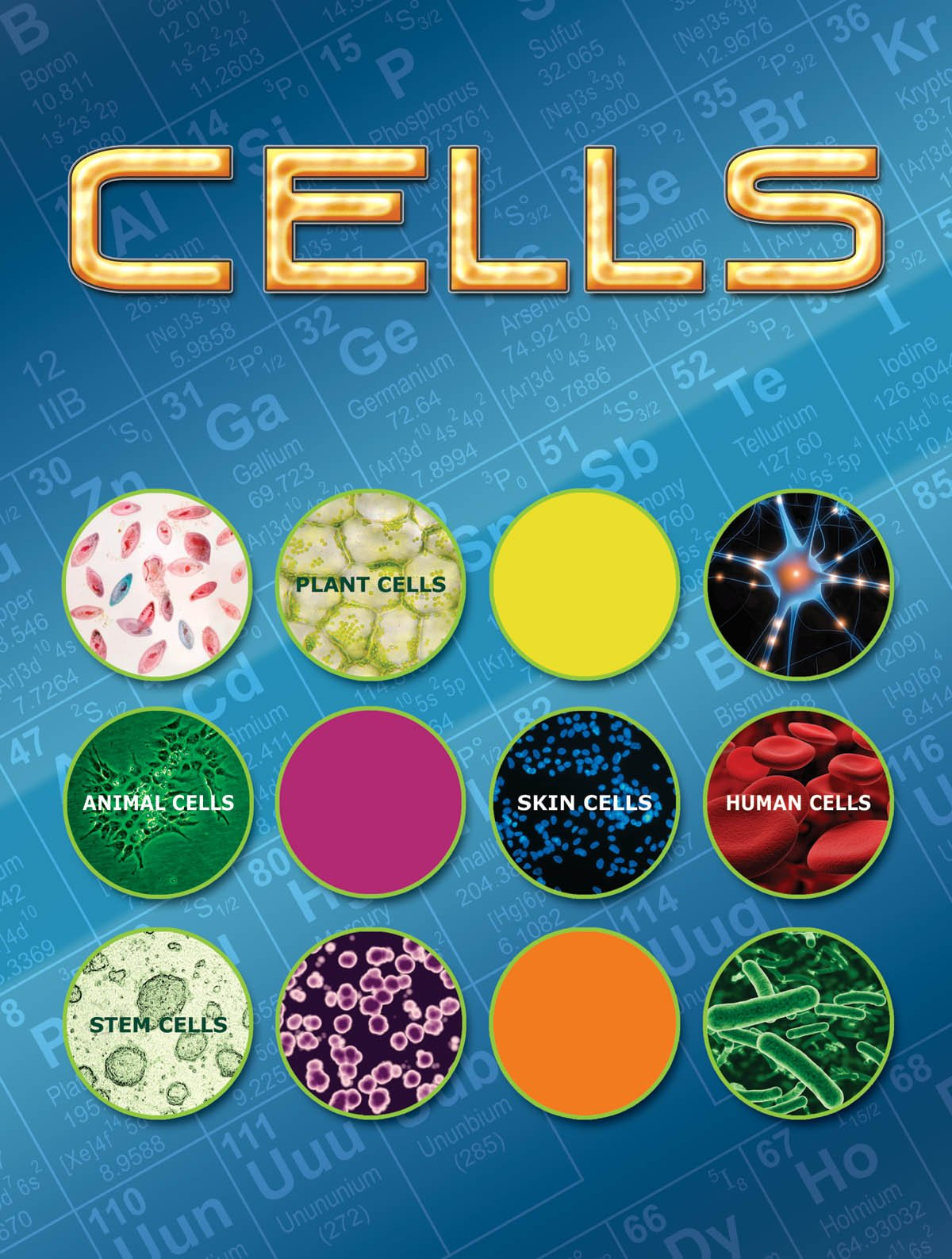 Cells (Let's Explore Science) ebook