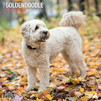 Amazon Com Goldendoodle 2018 Traditional Wall Calendar Office Products