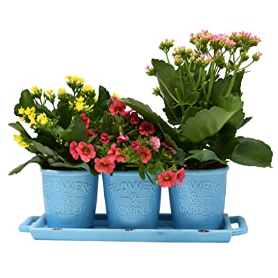 Ceramic Planters for House Plants-Plant Pots Set for Indoor & Outdoor Use (Rustic Aqua) by Arad : Garden & Outdoor