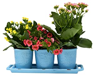 Ceramic Planters for House Plants-Plant Pots Set for Indoor & Outdoor Use (Rustic Aqua) by Arad