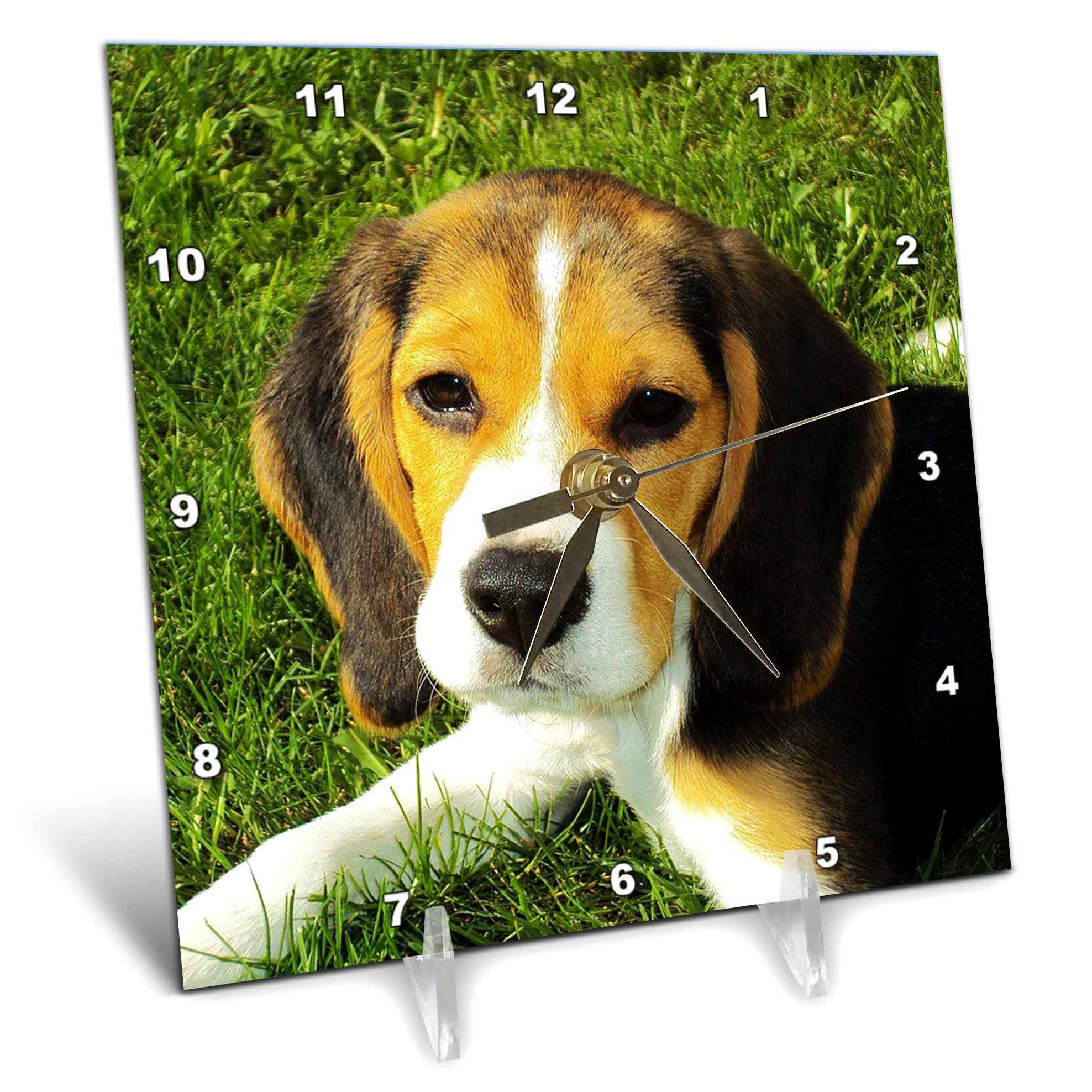 3dRose Beagle, Dog, Puppy, Animal, Pet - Desk Clock, 6 by 6-inch (dc_215176_1)