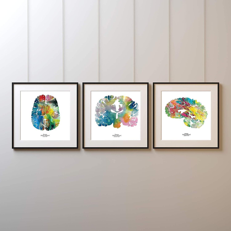 "J. Sayuri Human Brain Art - Set of Three 8.5"" x 8.5 Watercolor Prints - Colorful Neuroscience, Neurology, and Psychology Gifts - Great Birthday and Graduation Gift and Medical Wall Decor"