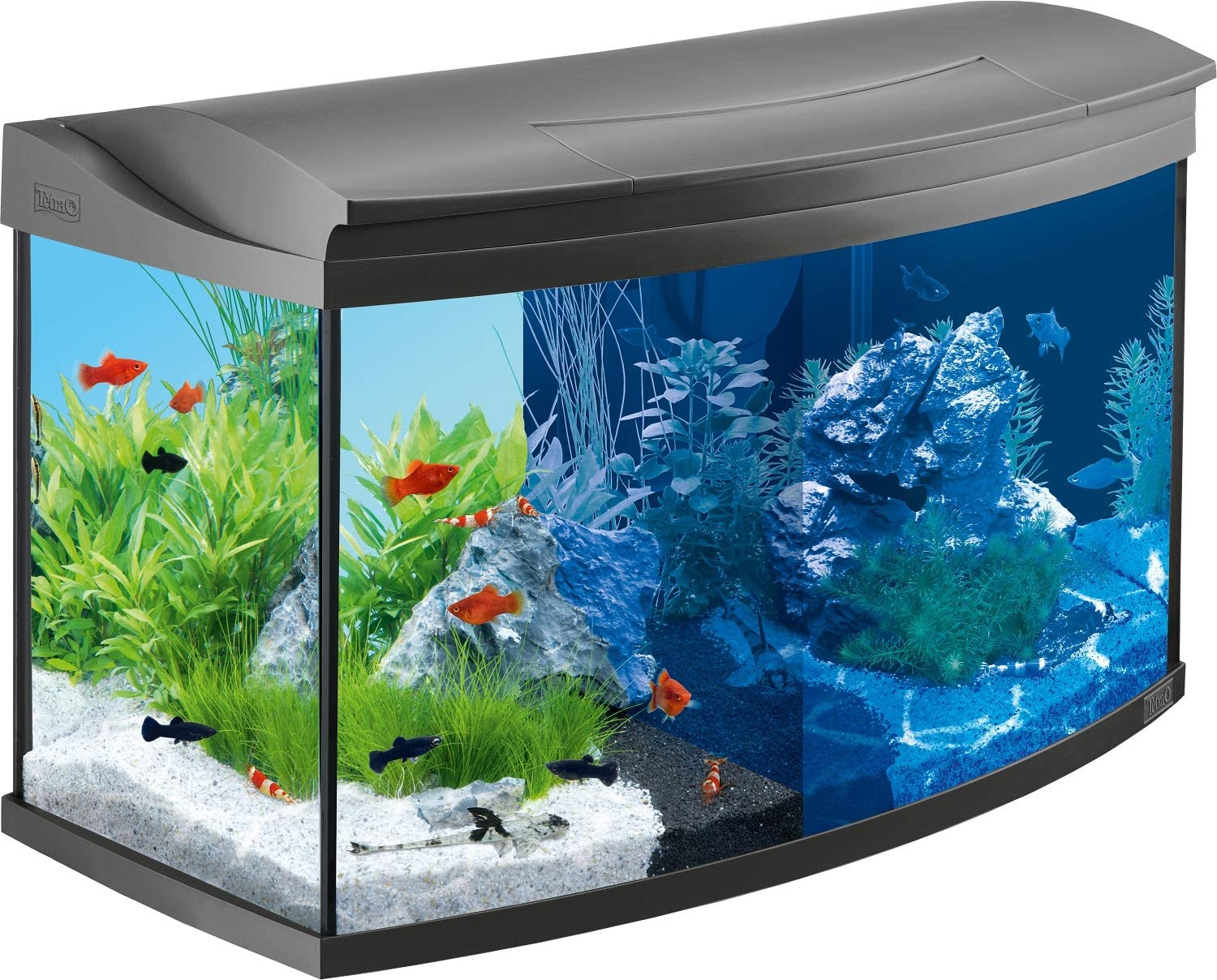Tetra AquaArt Evolution Line LED Acuario 100 L - Set completo ...