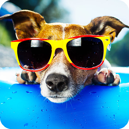 Ace Dog Breed Trivia - Free Fun Animal Quiz (Games Ace)