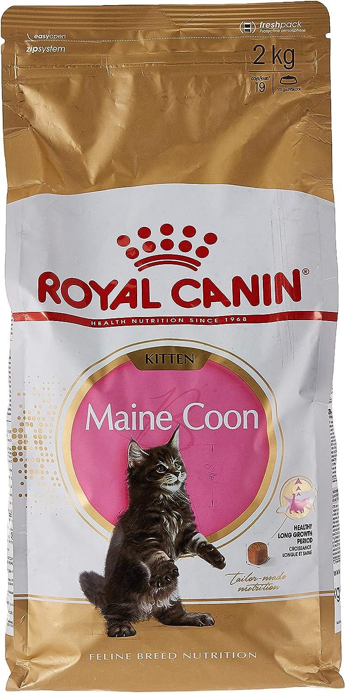 ROYAL CANIN Kitten Maine Coon - Comida para Gatos, 2 kg