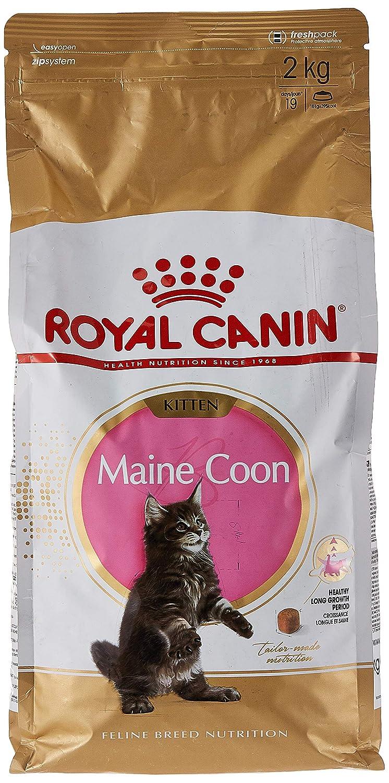 ROYAL CANIN Kitten Maine Coon - Comida para Gatos, 2 kg: Amazon.es ...