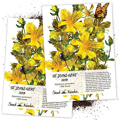 Seed Needs, St. Johns Wort Herb Hypericum perforatum Twin Pack of 1,000 Seeds Each Non-GMO