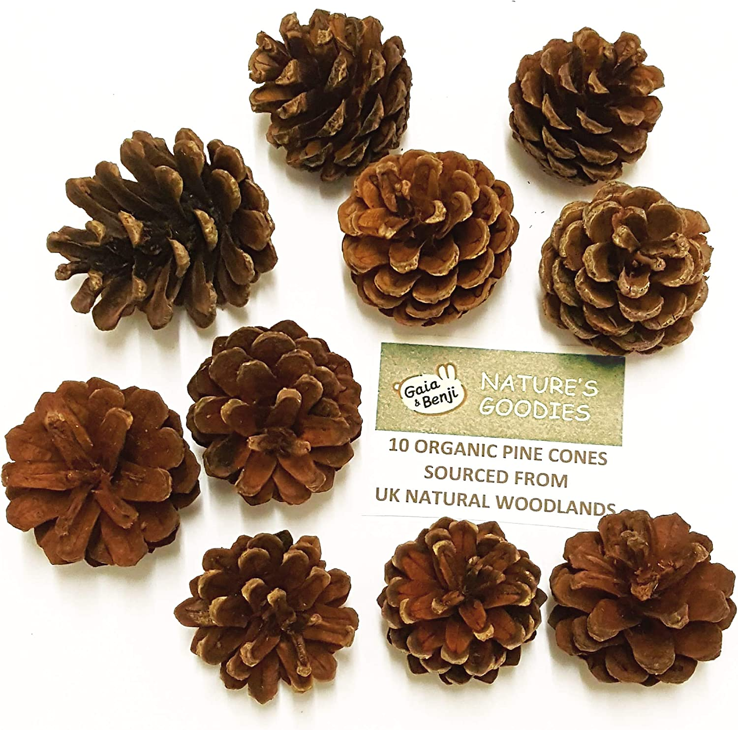 HFG 20 Organic UK Wood Pine Cone Pet Chew Toys Healthy Treats for ...