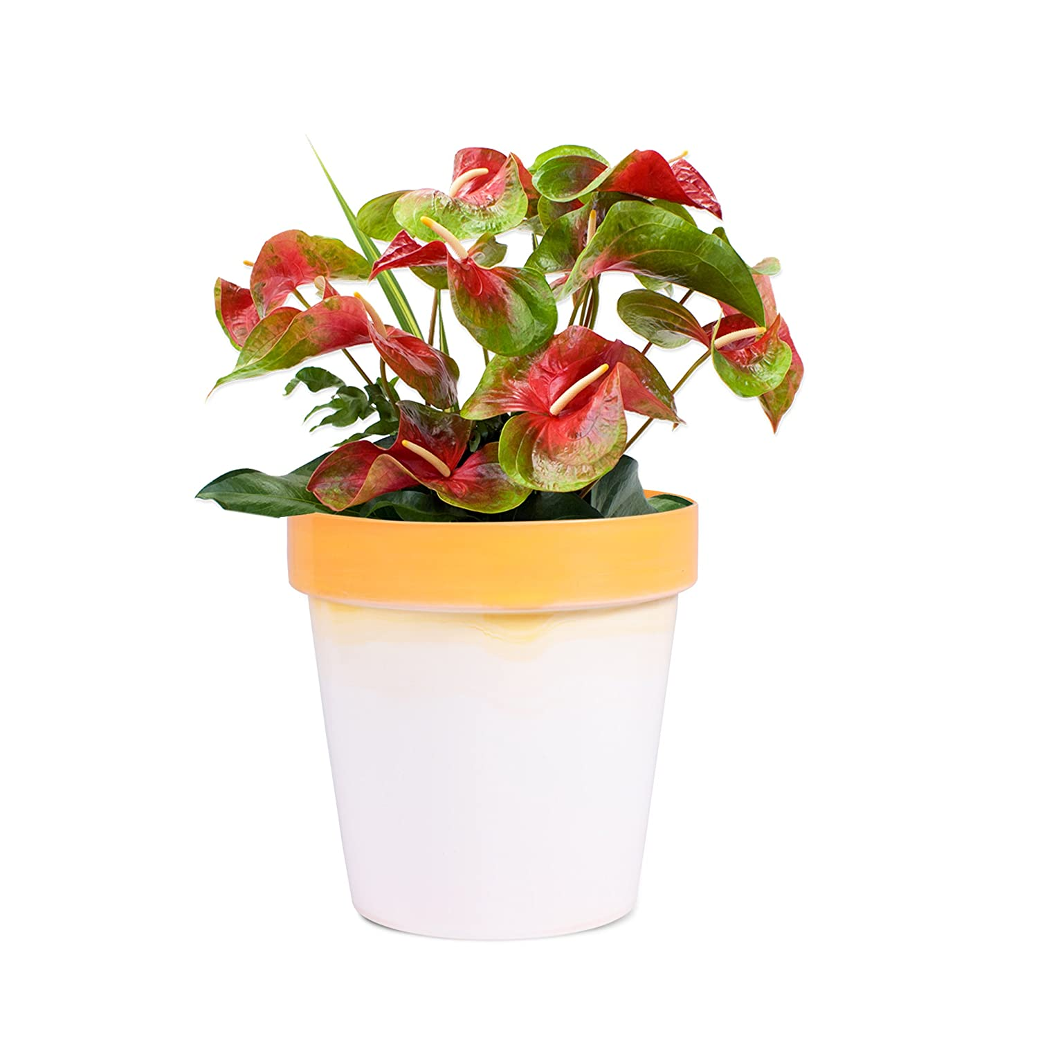 Sharpex Traditional Type Flower Pot (Orange)