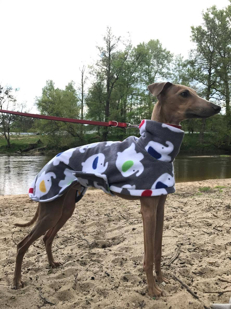 Superbe manteau d'intérieur pour lévrier DOG AND HOME