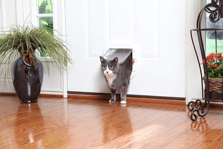 PetSafe Big Cat Gato 4 Vías Cierre Puerta, Exterior/Interior ...