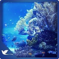 Bluish Fresh Aquarium - Underwater Sea Life