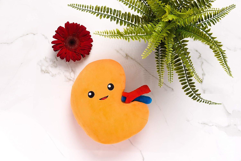 Amazon.com: Riñón juguete de felpa: Toys & Games