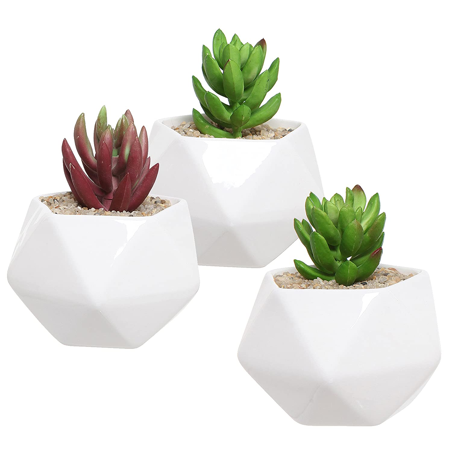 Amazon.com: Set of 3 White Ceramic Succulent Plant Pots ...