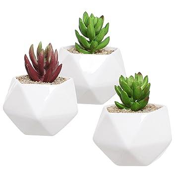 Amazon.com: Set of 3 White Ceramic Succulent Plant Pots ...