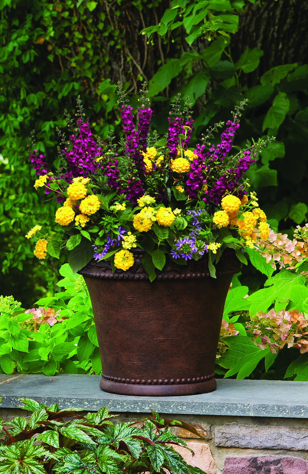 Burpee Combo 'Daydream' - Create Instant Colorful Container Gardens with Four 4 in. pots by Burpee (Image #3)
