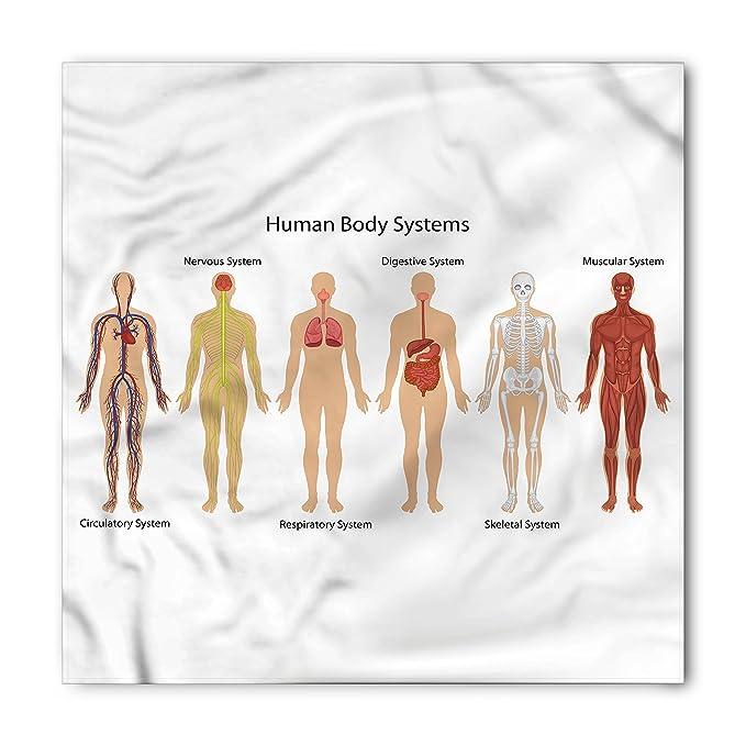 Amazon Ambesonne Human Anatomy Bandana Skeleton System Unisex