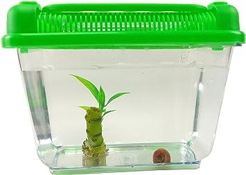 Evil Wear Aquarium Schnecke Im Set Wasser Schnecke Braun Mit Pflanze