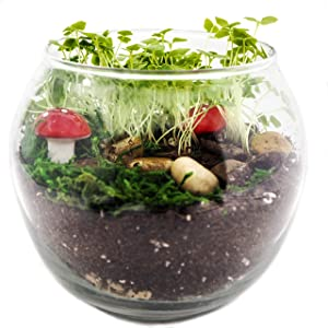 TerraGreen Creations - Easy Grow Complete Fairy Garden kit - Includes All Supplies for Making A Enchanted and Magical Fairy Garden - Great Indoor Garden - Made in USA