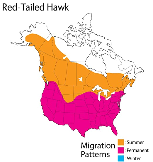 Amazon Wild Republic Audubon Birds Red Tailed Hawk Plush With
