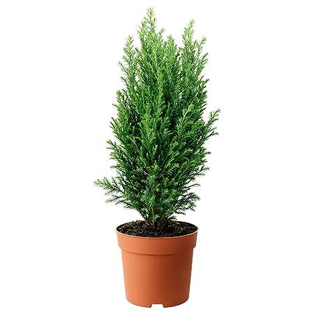 Get Some Deals Juniper Christmas Tree