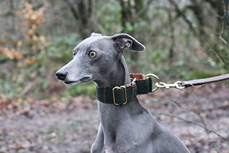 Collar para Perro de Tweed Verde Martingale Whippet Greyhound ...