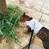 Cat Jeans Jacket Harness Vest with Matching Lead Leash Set