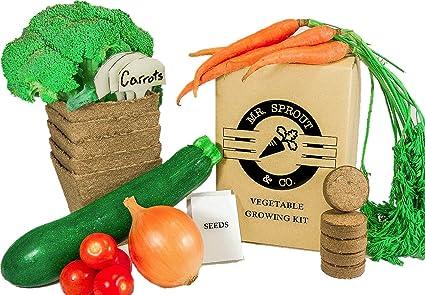 Amazon.com : Mr. Sprout & Co Organic Vegetable Garden Kit ...