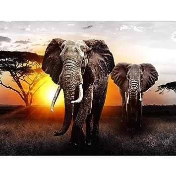 Fototapete Afrika Elefant - Vlies Wand Tapete Wohnzimmer ...