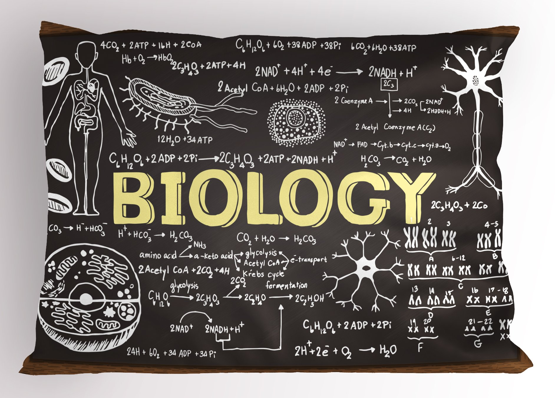 Ambesonne Educational Pillow Sham, Black Chalkboard Biology Hand Written Symbols School Classroom, Decorative Standard Size Printed Pillowcase, 26 X 20 inches, Black Brown Pale Yellow