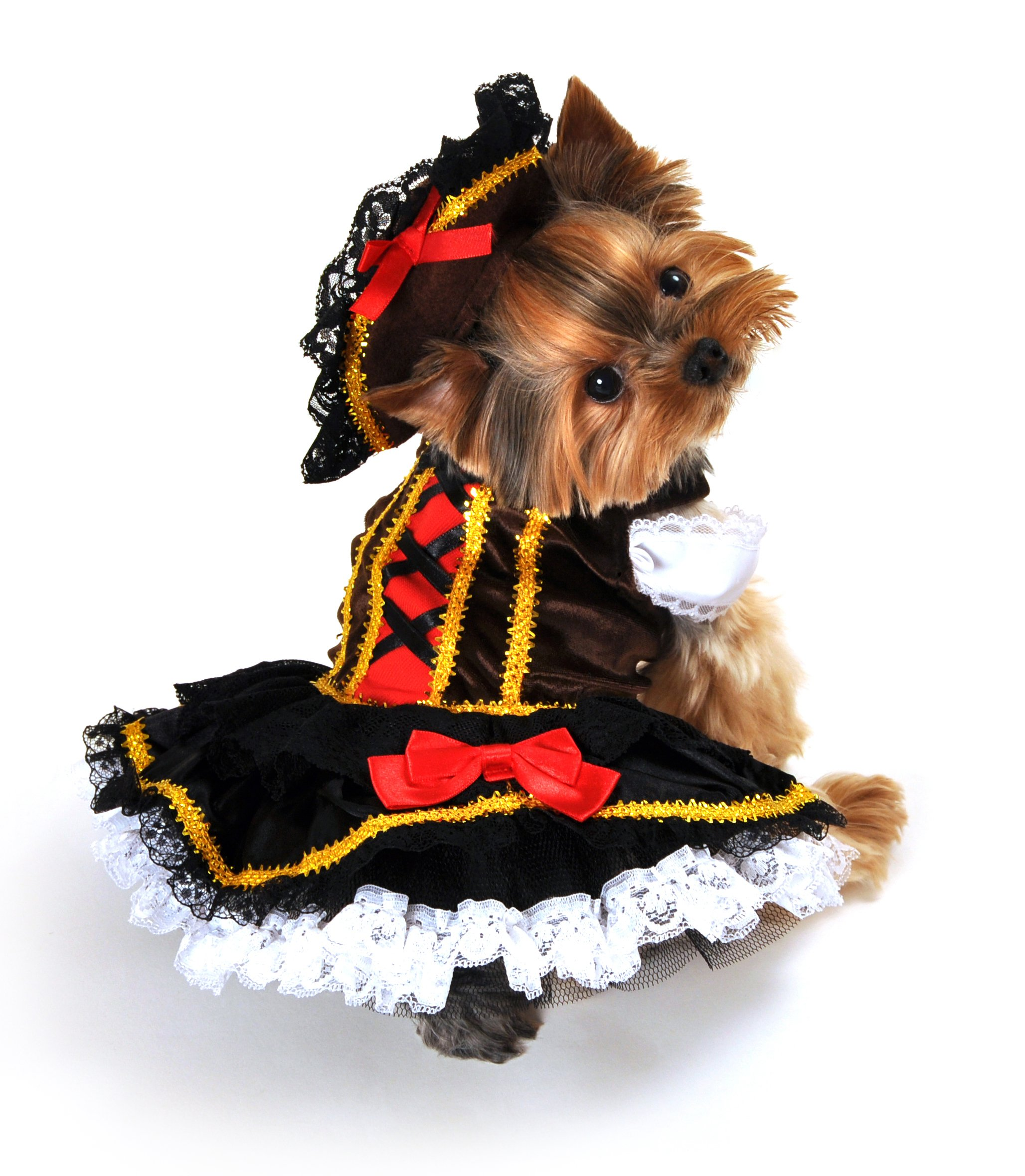 Anit Accessories Swashbuckler Pirate Girl Dog Costume, Large, 20-Inch