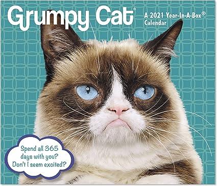 Grumpy Cat Calendar 2022.Amazon Com 2021 Grumpy Cat Year In A Box Calendar Lmb2470021 Office Products