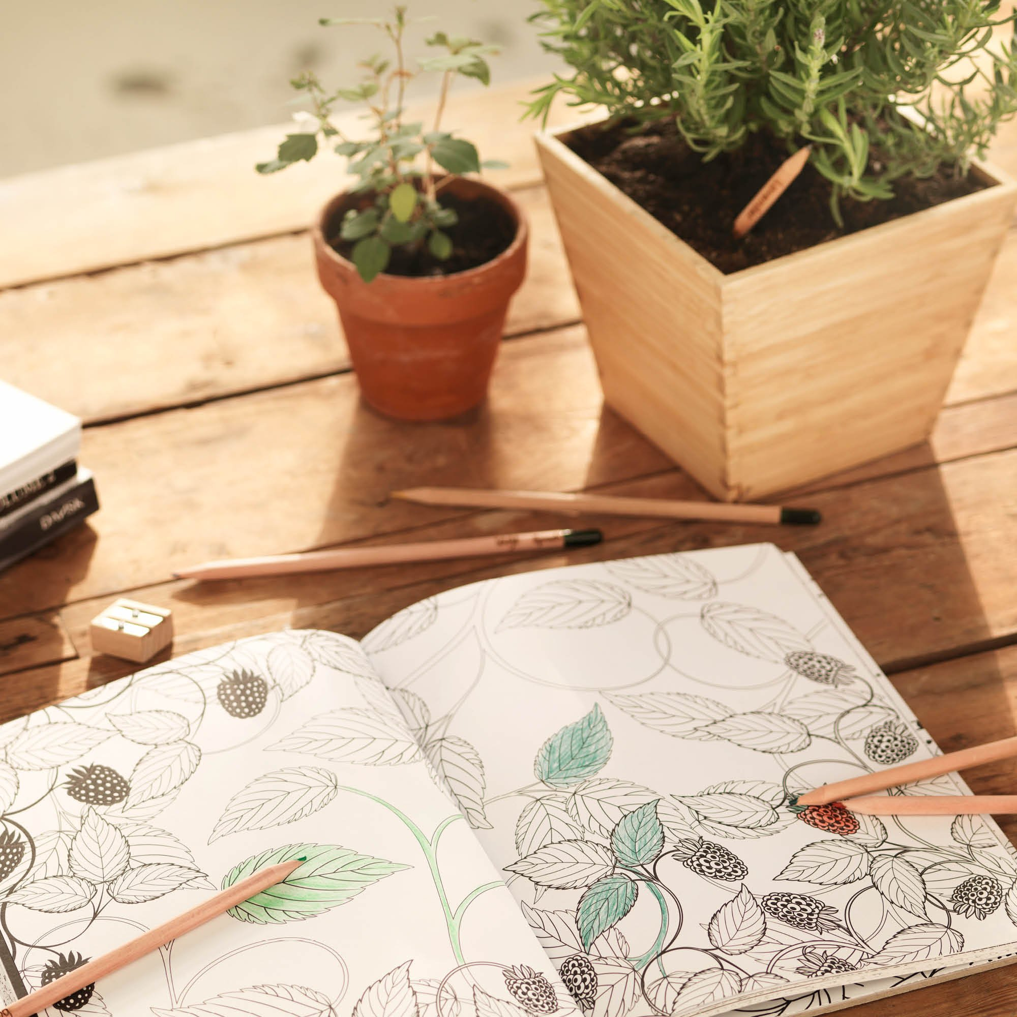 Sprout pencils - with mindful quotes | plantable graphite pencils with seeds in eco-friendly wood | 5 Pack |Gift set with herbs and flowers by Sprout (Image #6)