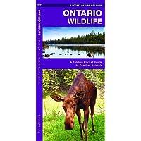 Ontario Wildlife: A Folding Pocket Guide to Familiar Animals