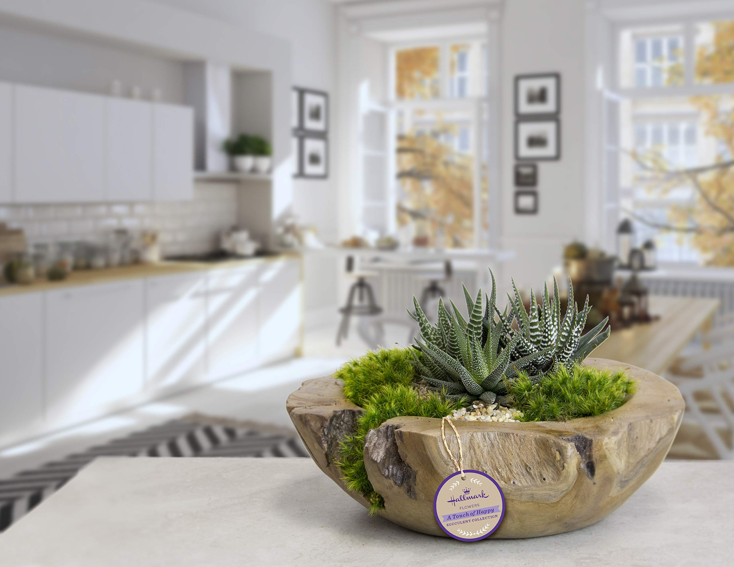Live Succulent Garden in 10'' Teak Bowl Container, From Hallmark Flowers by Hallmark Flowers (Image #2)