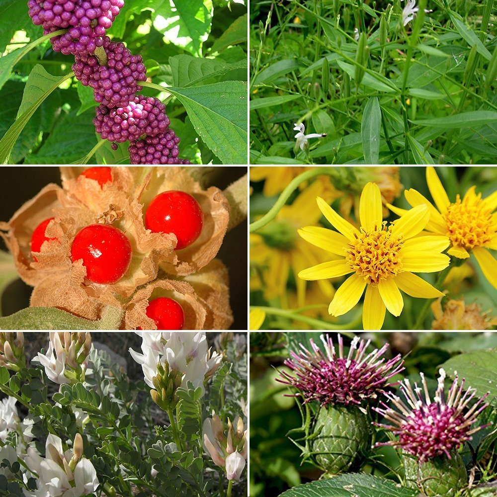 Medicinal Herb Garden Seed Collection #1 - A 6 Variety Pack of Rare Medicinal Herb Seeds! FROZEN SEED CAPSULES - The Very Best in Long-Term Seed Storage - Plant Seeds Now or Save Seeds for Years