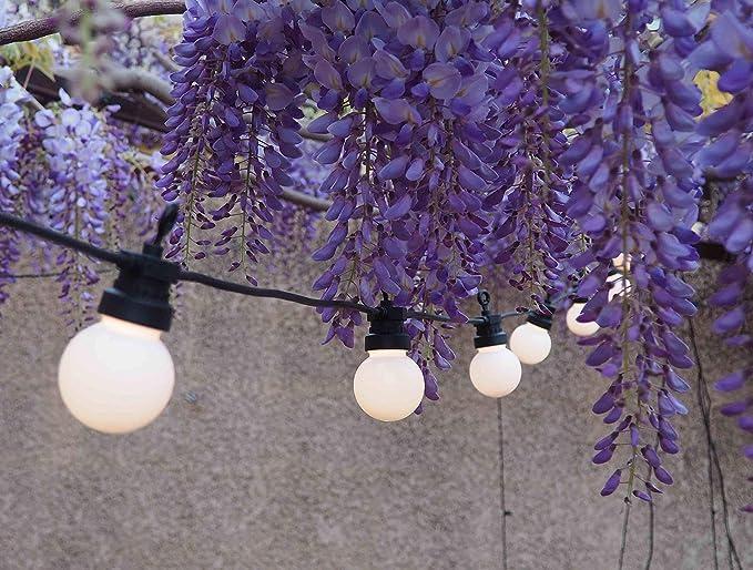 Guirlande Guinguette Lumineuse Extérieure I 20 Lampes