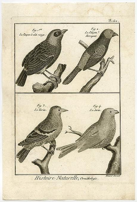 Amazon Com Antique Print Canary Siskin Finch Pinson Bird Pl 162 Bonnaterre Benard C 1790 Posters Prints