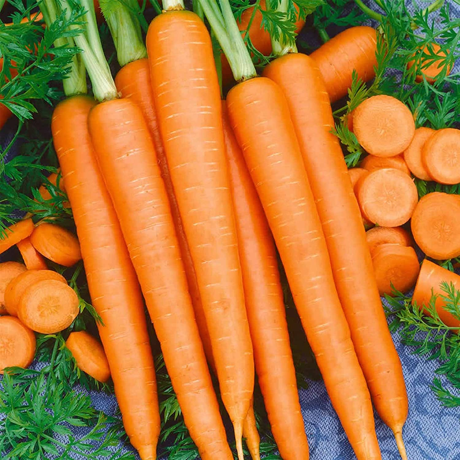 Tendersweet Carrot Seeds - 5 Lb ~1,600,000 Seeds - Non-GMO, Heirloom Vegetable Garden Seeds - Gardening by Mountain Valley Seeds