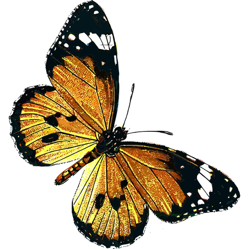 Butterfly Catalog -