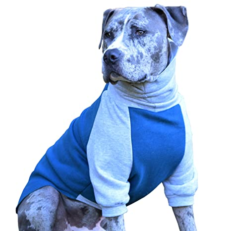 857c1f322821 Amazon.com   Tooth   Honey Dog Sweater Pitbull Bully Breed ...