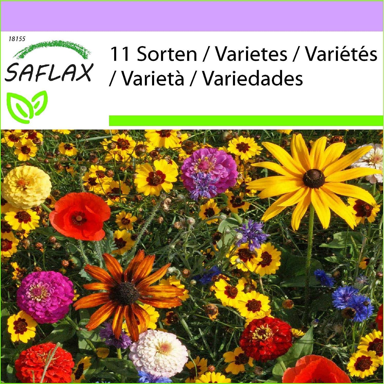 SAFLAX - Alegría para niños - 1000 semillas - 11 Wildflower Mix