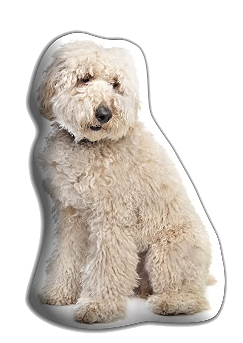 Labradoodle (crema) perro regalo - hermoso grande Cuddle ...