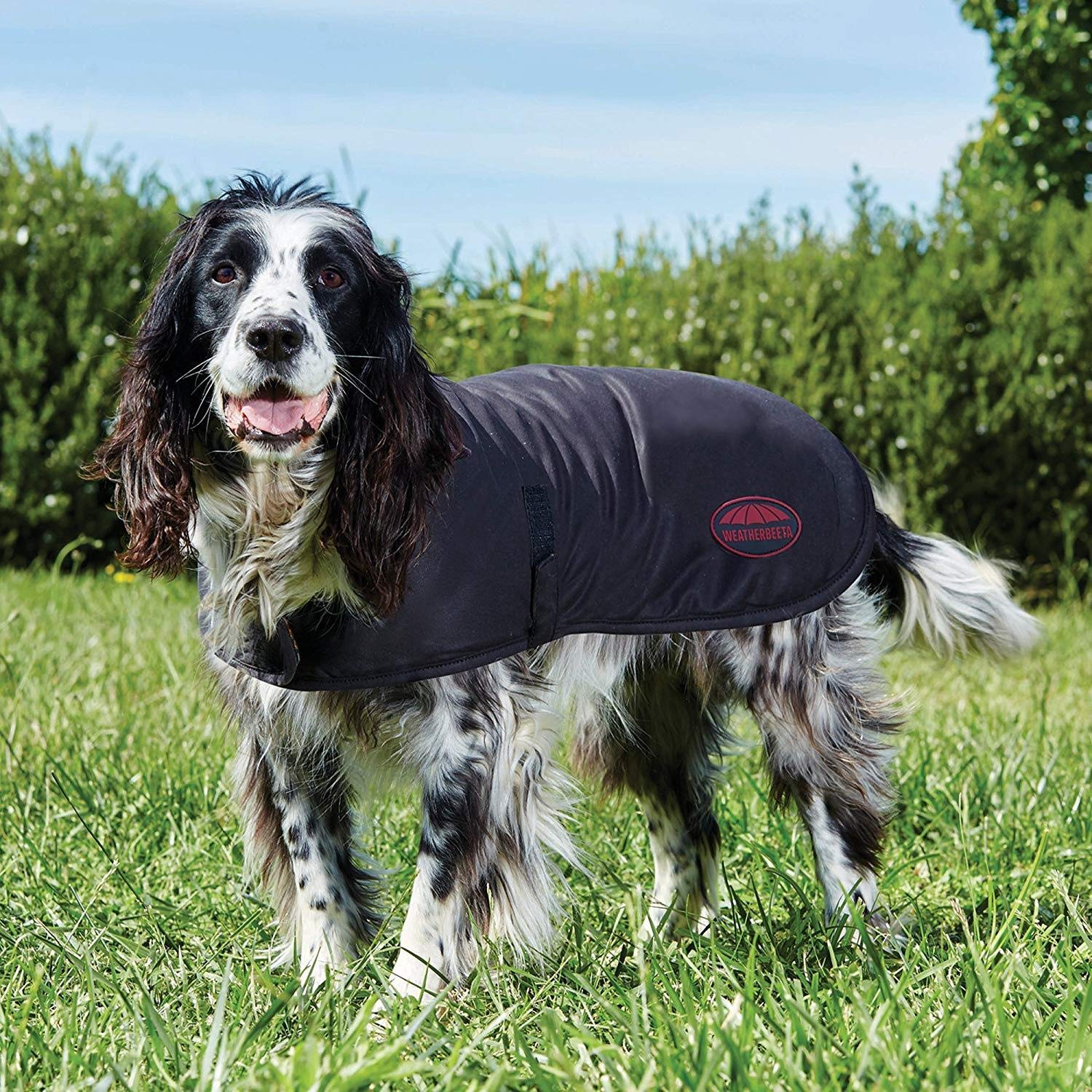 Brown 19.7 inches Brown 19.7 inches Weatherbeeta Waxed Dog Coat (19.7 inches) (Brown)