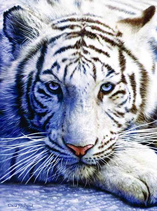 amazon com white tiger face 1000 pc jigsaw puzzle toys games