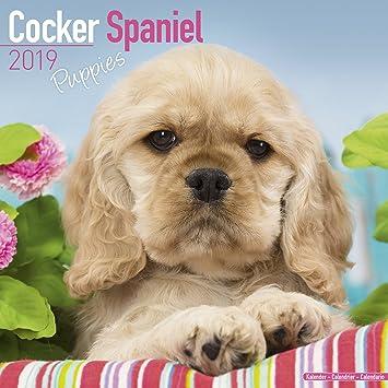 Puppies Calendar 2018 16 Month Calendar
