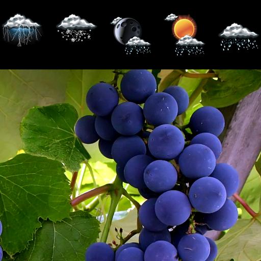 Grape Widget Clock Weather