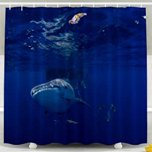 Pamime Waterproof Eco-Friendly Polyester Shower Curtain Hooks Whale Shark typus Shower Curtains 72X72Inches Bathroom